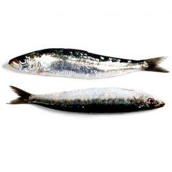 ofrenda de sardinas para el osha